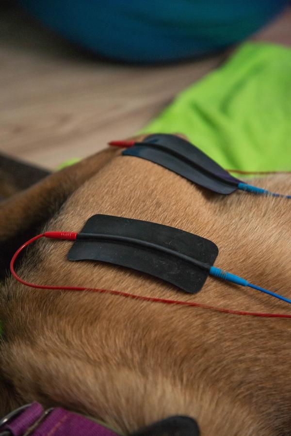 Elektrotherapie Hund